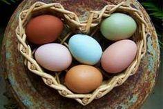 Blue egg, brown egg, white egg? Who laid what?