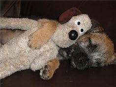 Awww! Border terrier and stuffie