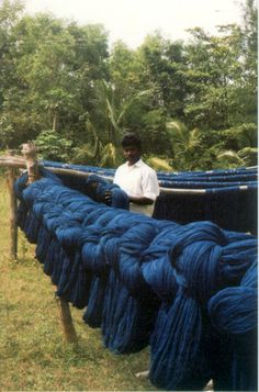 Natural Indigo Dye Yarn - in Auroville, Pondicherry, India