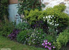 Du côté cour au mois de mai: ancolies, euphorbe 'Redwing Charam', heuchère 'Plum Pudding', geranium phaeum 'Samobor' © Jardinement Vôtre