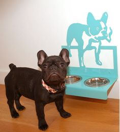 LOVE this idea for dog bowls! A dog feeding station to match your dog! Animals And Pets, Cute Animals, Pretty Animals, Dog Feeding Station, Dog Milk, Paws And Claws, Dog Feeder, Gadgets, Pet Furniture