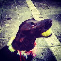 Nice sokaklarının en süslü köpeği:))