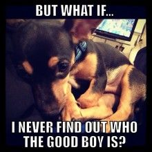 FREAKED out look memes | meme'd my puppy! Rourke says: But what if...I never find out who the ...