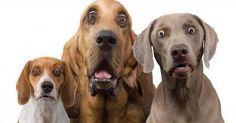 """""""dal patentino al guinzaglio ecco le nuove regole a cui chi ha un #cane deve attenersi"""""""