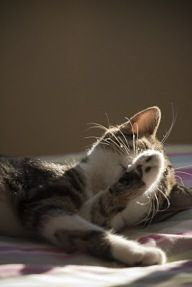 #109 Lying in a beam of sunlight coming through the window.  I do this almost daily :)