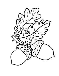 Printable acorn coloring page. Free PDF download at http://coloringcafe.com/coloring-pages/acorn/.