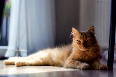Puss Cat  photo from my blog: http://www.photo4art.eu/   #cat #puss #pussy #pet #animal #kitten #kitty #eyes #bokeh
