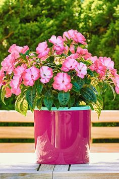 garden care vegetable Using Coffee Grounds To Power Your Garden, Flowers, Plants And More! Container Plants, Container Gardening, Gardening Hacks, Urban Gardening, Organic Gardening, Garden Yard Ideas, Lawn And Garden, Coffee Grounds For Plants, Easiest Flowers To Grow