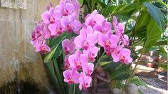 Így gondozd az orchideádat télen Plants, Plant, Planets