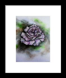 Rose Scent Framed Print by Faye Anastasopoulou Bloom Blossom, Spring Blooms, Sketch Drawing, Paintings For Sale, Artist At Work, Designs To Draw, Framed Art Prints, Modern Contemporary, Fine Art America