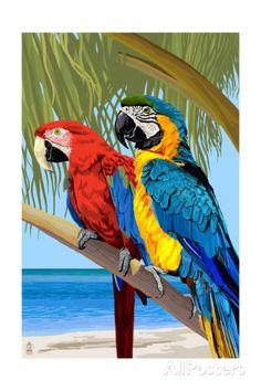 Papagaios Impressão artística
