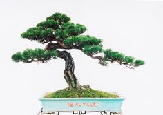 New bonsai tree drawing search 69 ideas