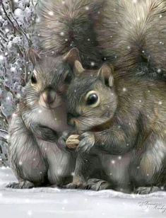 ❊Squirrels❊