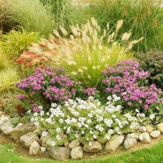 "Get the most from your ornamental grasses by pairing them with these plants.Purple Dome Astor & white Petunias. The grass is the dwarf Fountain Grass ""Hamlyn""."