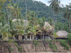 Arrecifes Tayrona National Park, I Site, National Parks, Spaces, Plants, Flora, Plant, Planting, State Parks