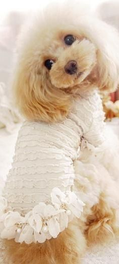 293 Best Dogs Dressed Up Images Cute Dogs Dog Dresses Costume