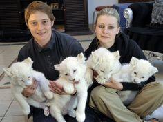 Quatro filhotes de leão branco são apresentados na cidade alemã de Schloss Holte-Stukenbrock