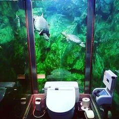 Restaurant Mumin Papa #Japon #ladiesonly #aquarium #tortue #turtle #restroom #wc #watercloset #cowatercloset #cowc Coming soon !