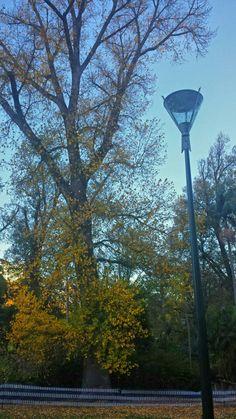 Autumn colours in Fitzroy garden, Melbourne Autumn Colours, Melbourne, Building, Garden, Nature, Travel, Color, Garten, Naturaleza