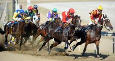 is always very difficult and very complex to understand. It takes too much time for a decision. For this solution, we provide betting tip experts. Ratings have great expertise in betting tips. Visit us now. English Horse Racing, Horse Racing Tipsters, Horse Betting, Sports Picks, Horse World, Race Day, Camel, Pony, Horses