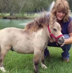 This Little Dwarf Horse Will Capture Your Heart -- The Animal Video Of The Day!!!  ... see more at PetsLady.com ... The FUN site for Animal Lovers