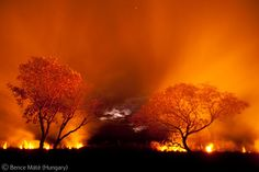 Fire on the Pantanal - Bence Máté - Wildlife Photographer of the Year 2010 : Eric Hosking Portfolio Award - Winner