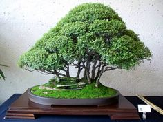 Beautiful forest bonsai!!! OH MY WOOOORD!!