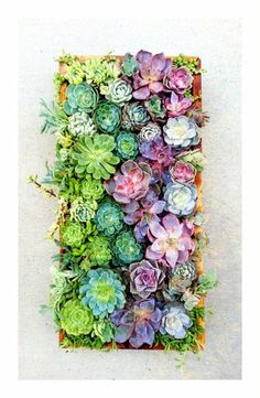 want. wooden frame, wire over the top, plant succulents in dirt in the frame. Let sit for a few months for the roots to set, then hang.