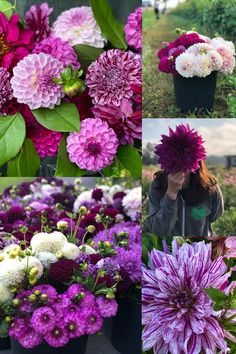 We love using this cool color palette at the farm. There are plenty purple dahlias for sale this December in our online store! Home Flowers, Bulb Flowers, Large Flowers, Purple Dahlia, Dahlia Flower, Garden Trees, Garden Plants, Vegetables Garden, Dahlias For Sale