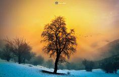 Kış ve Sis... - Winter & Fog.. Kış ve Sis...