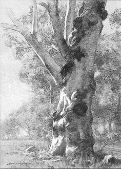 "John McCartin ""White Gum in Morning Light."" x Charcoal & white pastel on toned paper. Landscape Sketch, Landscape Drawings, Landscape Art, Landscape Paintings, Landscapes, Gravure Illustration, Illustration Art, Realistic Drawings, Easy Drawings"