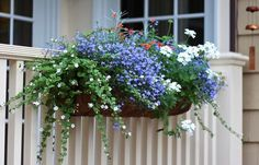 window box samples curb appeal gardening window treatments windows Summer w Window Box Plants, Window Box Flowers, Window Planter Boxes, Flower Boxes, Flower Containers, Mailbox Planter, Cedar Planter Box, Garden Frogs, Faux Flower Arrangements