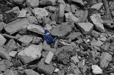 Borboleta azul uma beleza no meio dos entulhos