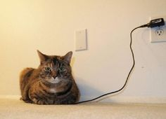 Recharging Cat