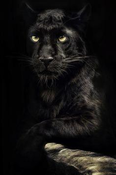 Black Panther ~ by Manuela Kulpa