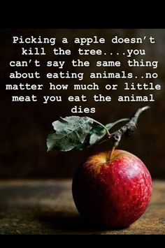 Go vegan eat plants. Vegan Facts, Vegan Memes, Vegan Humor, Vegetarian Quotes, Vegan Quotes, Vegan Vegetarian, Vegetarian Recipes, Reasons To Be Vegan, Why Vegan