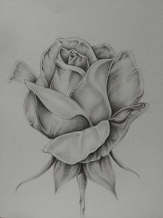 Graphite rose print - New Site Realistic Flower Drawing, Pencil Drawings Of Flowers, Flower Art Drawing, Flower Sketches, Art Drawings Sketches Simple, Pencil Art Drawings, Realistic Drawings, Rose Drawings, Flower Sketch Pencil