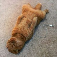 What happens when you forget to charge your cat!