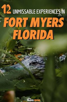 12 Fun Things to Do in Fort Myers, Florida Fort Myers Beach Florida, Florida Vacation, Florida Travel, Florida Beaches, Travel Usa, Travel Tips, Canada Travel, Travel Ideas, Adventurous Things To Do
