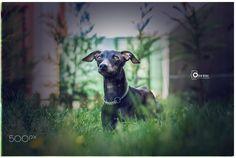 pele ... - wish a good time . Ozan Kuas photography ... follow me...