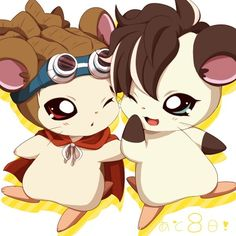 Kidou the hamster and Fudou the hamster :3