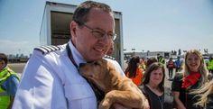 Una compagnia aerea salva degli animali rimasti orfani dopo la tempesta in Texas
