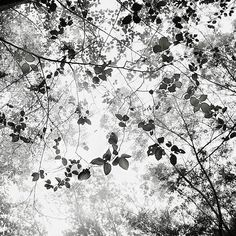 Foliage by Hengki Koentjoro, Photography, Digital Tree Forest, Great Photos, Black And White Photography, Fine Art Photography, Beautiful Pictures, Illustration Art, Leaves, Photo And Video, Drawings