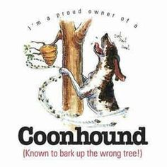 coonhound.