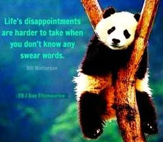 Life's disappointments quote via Sue Fitmaurice at www.Facebook.com/SueFitz50