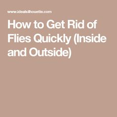 How to Get Rid of Flies Quickly (Inside and Outside) - My Healthy Reason Fly Deterrent, Fly Repellant, Home Remedies, Natural Remedies, Insect Repellent Plants, Get Rid Of Flies, Natural Pesticides, Natural Insecticide, Oils For Life