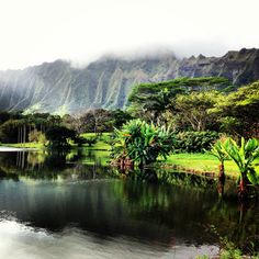 Ho'omaluhia gardens, O'ahu. Photo by Jennifer Ozawa