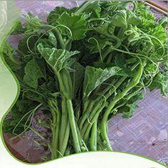 Best Garden Seeds Rare Vegetables The Pumpkin Seedling Seeds, Original Pack, 10 Seeds, Easy Grow Courtyard Seeds