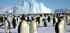 南極 イメージ - Google 検索