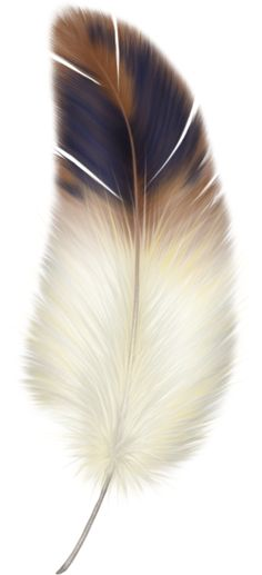 Beautiful Brown, Whites and cream feather Feather Painting, Feather Art, Feather Tattoos, Feather Texture, Feather Drawing, Feather Design, Tatoos, White Feathers, Bird Feathers